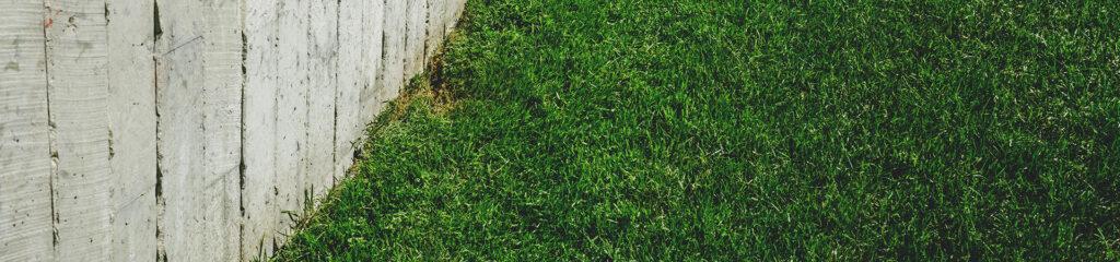 pelouse tondu d'un jardin