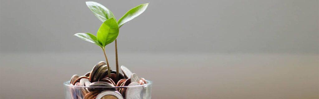 plante dans un verre rempli de pièces