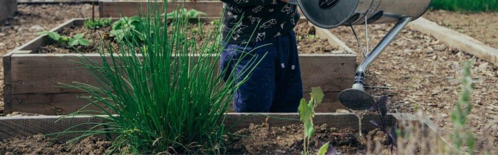 enfant versant de l'eau dans le potager